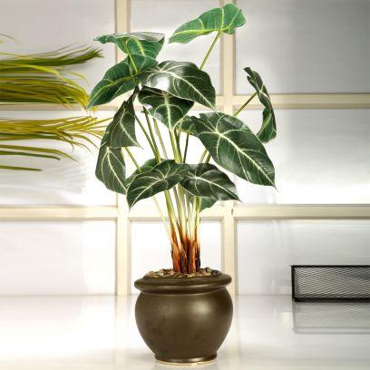 Artificial Alocosia Bonsai Plant with a Ceramic Vase (Green and White)