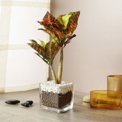 Artificial Croton Plant in a Glass Vase with Stones