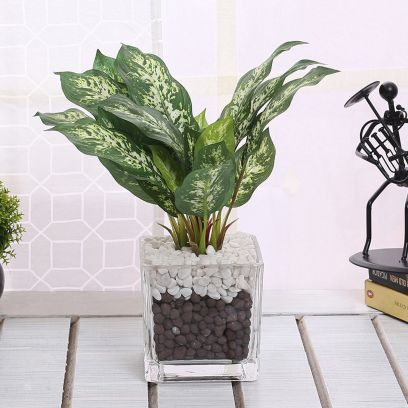 Buy Glass Planter with Plant Online @ Wooden Street