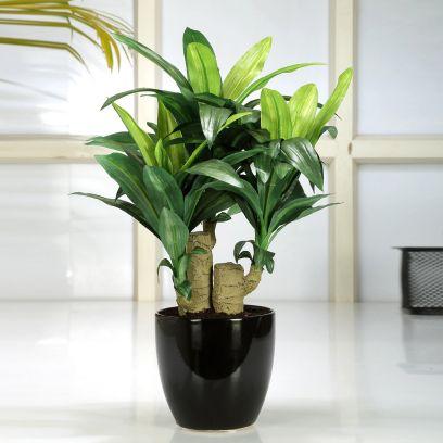 Artificial Dracaena Bonsai Plant in a Ceramic Vase (Green)