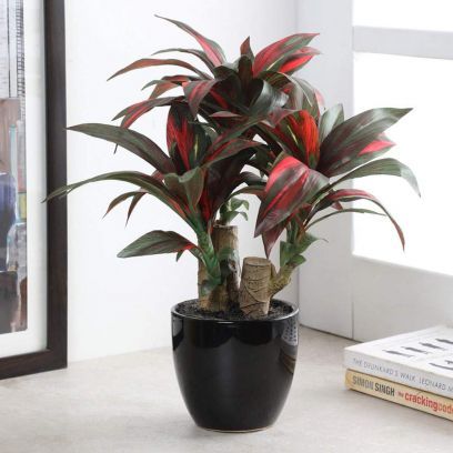 Artificial Dracaena Bonsai Plant in a Ceramic Vase (Green and Red)