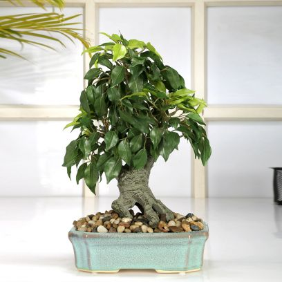 House planters online India low price, online gifts for women