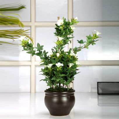 Artificial Morning Glory Bonsai Plant in a Ceramic Vase (White)