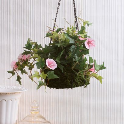 Buy Hanging Planter with Plant Online from Wooden Street
