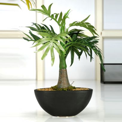 Artificial Roystonea Bonsai Plant with Ceramic Pot