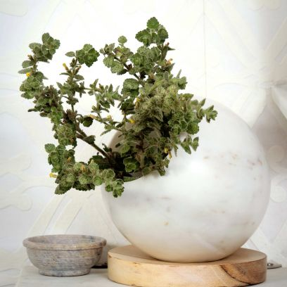 White Marble Planter with Wooden Base